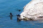 Baikal seal on rest. Russia — Stock Photo