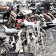 Bicycles — Stockfoto #5530795
