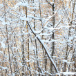 Winter forest — Stock Photo #6455430