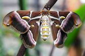 Silk butterfly — Foto Stock