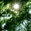 Green leaves and sun — Stock Photo #5931013