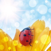 Flower and ladybug — Stock Photo