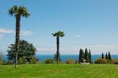 Sea, palms and blue sky — Stock Photo