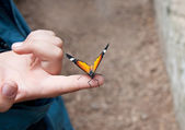 Butterfly on child's hand — Stock Photo
