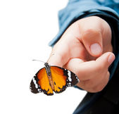 Butterfly on child's hand, isolated — Stock Photo