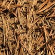 Anthill - Stock Photo