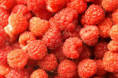 Berries of a raspberry — Stock Photo