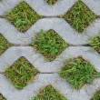 Lawn Lattice — Stock Photo