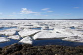 Sea ice is destroyed in the spring — Стоковое фото
