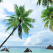 Beautiful beach with palm trees — Stock Photo