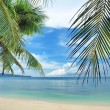 Beautiful beach with palm trees - Stock Photo
