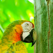 Colourful parrot bird sitting on the perch — Stock Photo #5550857