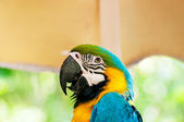 Colourful parrot bird sitting on the perch — Stock Photo