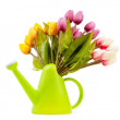 Gardening concept - Tulips and watering can - Stock Photo