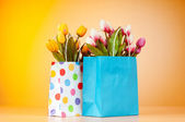 Tulips in the bag against gradient background — Stock Photo