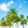 Palms trees on the beach during bright day — Foto de Stock