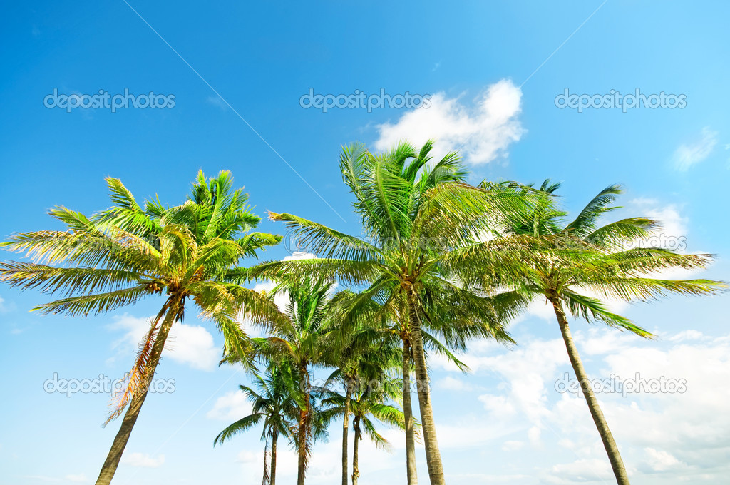 Palms trees on the beach during bright day — Stock Photo #5982910
