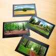 Royalty-Free Stock Photo: Forest on the picture frames