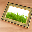 Green grass on the photo frame — Stock Photo #6083342