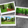 Stock Photo: Forest on picture frames