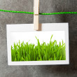 Green grass on the photo frame — Stock Photo #6084389