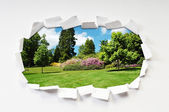 Torn paper with trees through the hole — Stock Photo