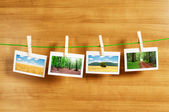 Forest on the picture frames — Stock Photo