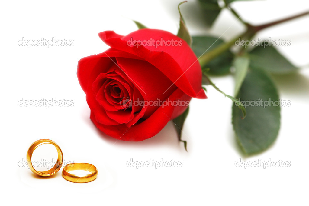 Wedding concept with roses and rings — Stock Photo #6083461