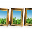 Green grass in the picture frames — Stock Photo