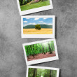 Forest on picture frames — Stockfoto #6208874