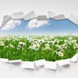 Camomiles field through hole in paper — Stockfoto #6208914
