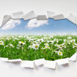 Stockfoto: Camomiles field through hole in paper