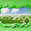 Camomiles field through hole in paper - Stock Photo
