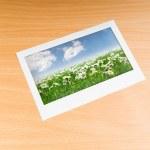 campo para fotos Camomiles na moldura — Foto Stock