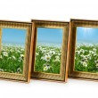 Daisy flowers in the picture frames on white — Stockfoto