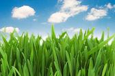 Green grass against blue sky — Stock Photo