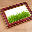 Green grass on the photo frame — Stock Photo #6484758