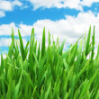 Stock Photo: Green grass against blue sky