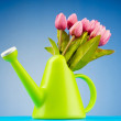 Gardening concept - Tulips and watering can — Stock Photo #6485687