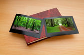 Forest on the picture frames — Foto Stock