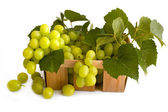 Isolated green grape with leaves in box — Stock Photo