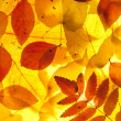 Yellow and red leaves — Stock Photo