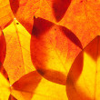 Yellow and red leaves — Stock Photo #6635942