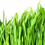 Green grass — Stock Photo #6635963