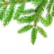 Green fir - Foto Stock