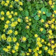 Stock Photo: Yellow flowerbed