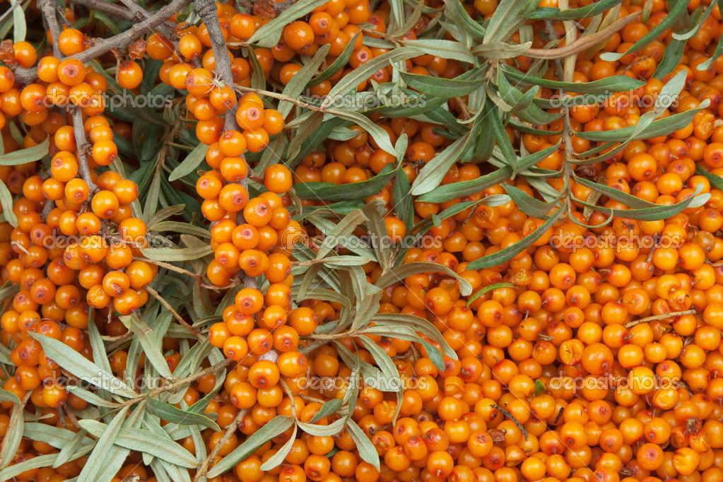 Orange  sea-buckthorn with green twig — Stock Photo #6635697