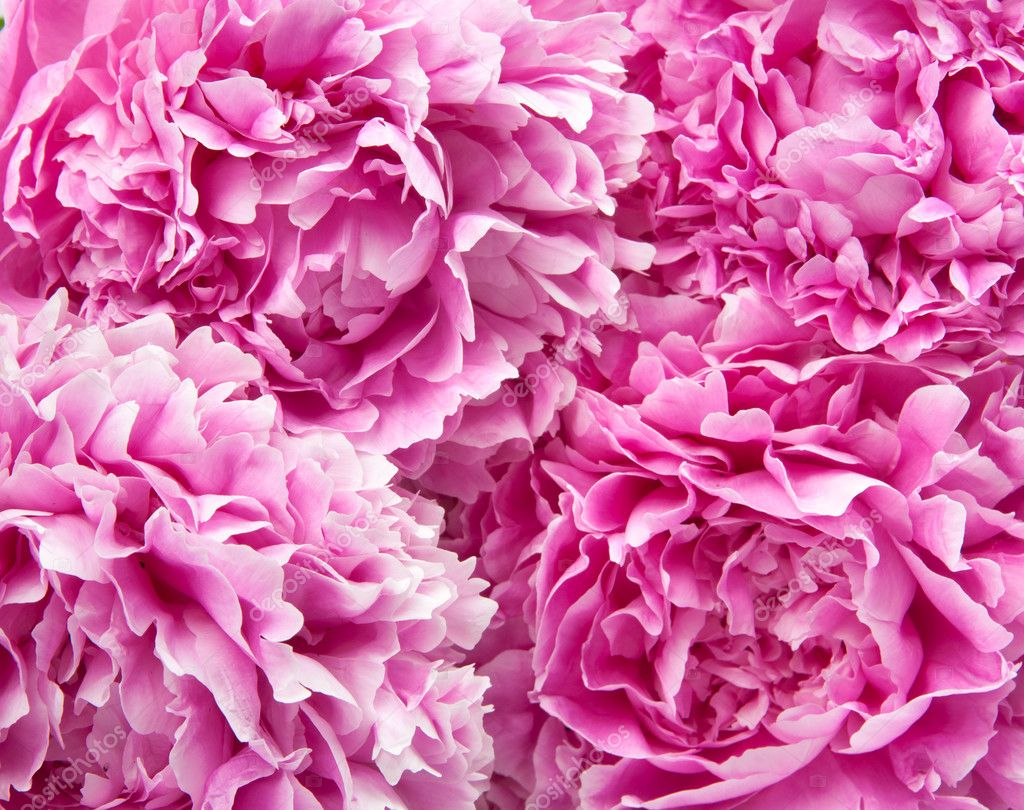 Bouquet of peonies — Stock Photo #6636341
