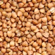 Buckwheat — Stock Photo #6733805