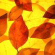 Stock Photo: Yellow and red leaves